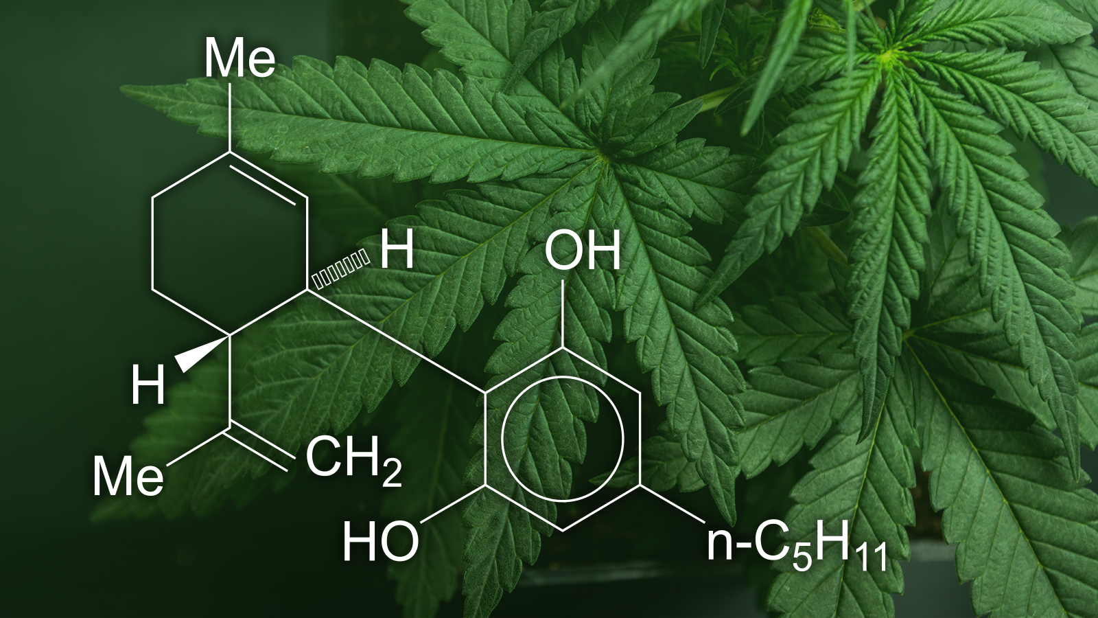 Ten Effective Ways To Get Out Of Cbd Oil Amazon